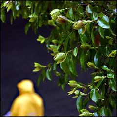Rainy Weekend (jijis) Tags: china morning trees home yellow shanghai saturday rainy raincoat jing jijis