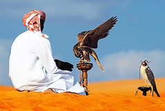 I can show you wonders. (Abdullateef Al Marzouqi) Tags: blue sand desert uae abudhabi falcon falcons abudhabiairport laati