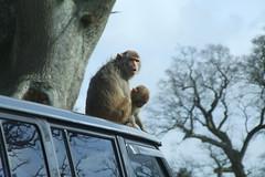 Longleat Safari Park #25