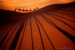 Sahara Express (LucaPicciau) Tags: africa shadow sahara train sand shadows dunes ombra ombre arena camel morocco shade maroc marocco caravan duna camels deserto sabbia erg africano merzouga rissani lupi deserti chebbi صحراء desertscape carovana cammelli dromedari picciau lucapicciau كبرى صحراءكبرى
