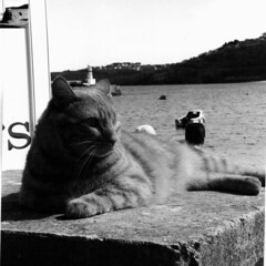 Seacat - St Ives, Cornwall (VEB Zardoz the Gravyboat) Tags: uk sea portrait england bw cats holiday film apple animal animals analog cat easter mono seaside mac nikon cornwall fuji noiretblanc unitedkingdom britain cottage bn software iphoto british analogue manual nikkor schwarzweiss mere stives  cornish nikkormat infocus seacat  nikkormatft2 onfilm nikkor50mmf2 bwc41 fujineopan europebw storbritannien bestofcats blancenegre