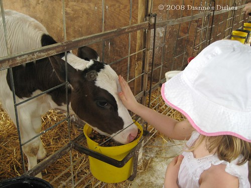 Pet the Calf