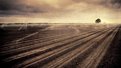 ........t.:... (colerise) Tags: road light sky bw brown white black tree texture nature water field sepia clouds landscape path farm horizon perspective dramatic dirt chapeau land themoulinrouge vision100