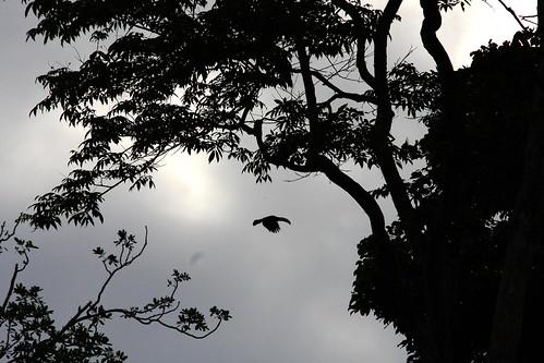 Costa Rica - Día 3 (182)