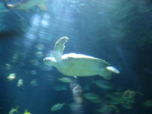 10 Turtle