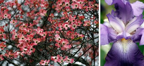 1.Flowers-1