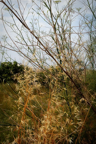 Vegetational-texture