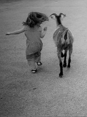 Goat Girl (Maureclaire) Tags: bw white black girl monochrome de child bambini kinderen goat running kinder nios ziege littlegirl enfants cabra con ged kambing geit pequeos chvre capra d  kei copii lapset koza kecske   brn dti gyerekek vuohi ocuklar anakanak   otroci   mgabata    fmijt