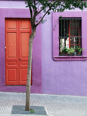 Lilla (antonio.pitta) Tags: barcelona street door city trip travel family blue friends party summer italy house holiday plant tree planta art beach home window nature architecture arbol ven