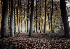 if you go down to the woods today . . . (rockstro) Tags: autumn trees light leaves glow canon5d henley henleyonthames dapa nothdr canonef1740f4lusm dapagroup dapagroupmeritaward nothingaddsup lambridgewoods