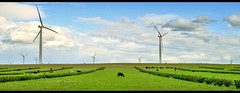 Wind power plants and a cow - Western Australia (kryyslee) Tags: world pictures voyage trip travel plants color colors field grass clouds canon photography eos cow photo energy foto power cows image wind photos pics couleurs energie picture australia images du traveller adventure round around prairie christophe monde nuages backpacker amateur pict autour couleur vache herbe 2007 vaches australie worldtrip globetrotter aventure durable eolienne 50d aroundtheworldtrip eoliennes 400d australiawestcoast 20072008 kryyslee christophepaquignon paquignon voyageautourdumonde