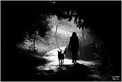Sefton Park Mist VI (petecarr) Tags: park blackandwhite bw mist fog liverpool landscape earlymorning seftonpark