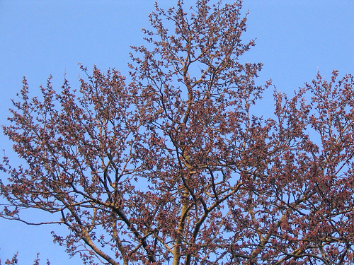 spring-095