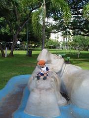 Riding a hippo