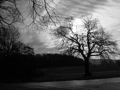 creepy view (dandavie) Tags: winter blackandwhite sun tree branches creepy ashtoncourt horrer
