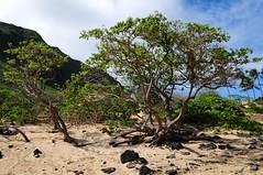 Hava (Windward Coast) Makapu'u Beach Park 184 (Arnaldo (Interata)) Tags: makapuubeachpark halonablowhole makapuubeach makapuulookout