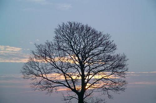 15_03_9---Tree_web.jpg