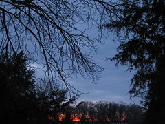 Ash On Fire (#2), Minneapolis, Minnesota, March 2008, photo © 2008 by QuoinMonkey. All rights reserved.