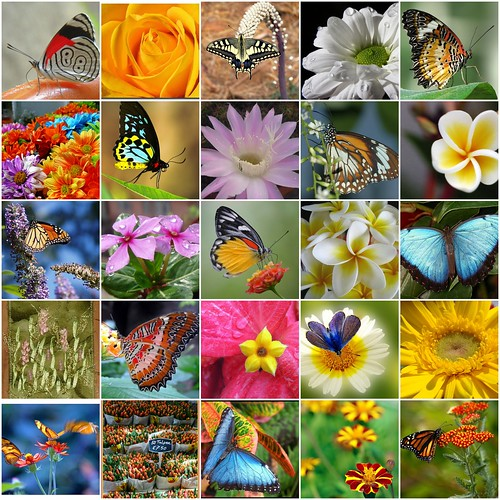 butterfly & flower mosaic by Veri's kleiner Winkel.