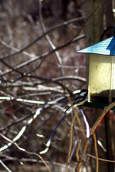 04/15/08 bird
