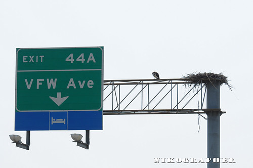 The Osprey of Exit 44A Route 50 Maryland (3 pix)