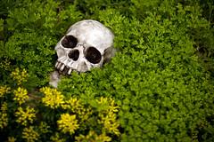 skull (chrisglass) Tags: skull stlouis