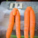 Mr and Mrs Carrot. We didn't grow these ones unfortunately