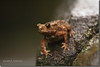Kantaji's Frog (Shabbir Ferdous) Tags: summer art nature photographer frog bangladesh dinajpur bangladeshi canoneosrebelxti shabbirferdous sigmazoomtelephoto70300mmf456apodgmacro wwwshabbirferdouscom shabbirferdouscom