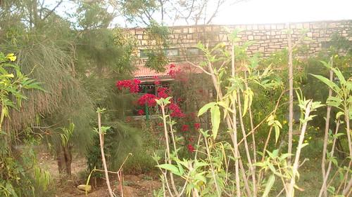 Faculty garden