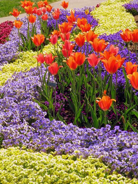 Cheekwood 9: Color Garden