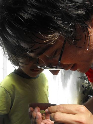 Estudiando el escarabajo