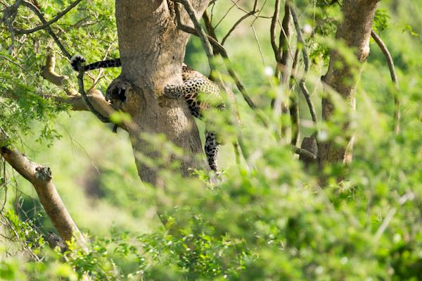 RYALE_Rwanda_Uganda_Safari-231