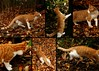 tale (Br0m) Tags: autumn pet cats oslo cat observation fun play montage 2007 brom canonef55200 piratetreasure canoneos400d pixelthecat piratetreasure2 piratetreasure3
