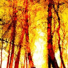 Wild Dance!!! (Denis Collette...!!!) Tags: canada reflection dance bravo quebec danse rivire reflet genesis soe sauvage diamondclassphotographer flickrdiamond deniscollette wildriver world100f icantdance explorewinnersoftheworld
