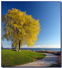 Back to Autumn (Lisa-S) Tags: blue autumn sky panorama toronto ontario canada tree green fall grass yellow lisas scarborough lakeontario pathway allrightsreserved invited themoulinrouge naturesfinest scarboroughbluffs 4958 supershot flickrgold anawesomeshot vertorama thegardenofzen getty2009 soldongetty copyrightlisastokes getty20090324