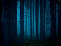 mystischer Wald - mystical forest