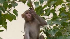 hello monkey! (sugarcoma) Tags: trip travel friends people india cows delhi goa agra human varanasi mumbai pushkar jaipur kochi jaisalmer hindi udaipur ranakpur jodhpur khajuraho alleppey subcontinent