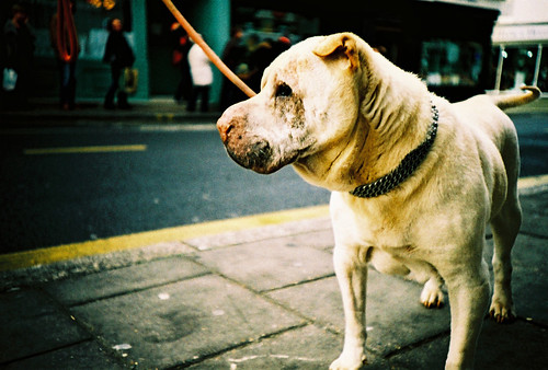 regretful dog par lomokev