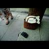 北野天満宮 Kitano-tenmangu shrine (Masahiro Makino) Tags: woman 20d japan photoshop canon eos fan kyoto shrine lomolca adobe kimono 北野天満宮 着物 lightroom 浴衣 f456 efs1785mm kitanotenmanguh feelfreetotagthis 20070725162401canon20ds25p