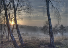 cold heathland sunrise above the fog (mikE~510) Tags: morning trees sun mist cold tree silhouette fog sunrise frost olympus heath e510 firstquality surreywalks platinumphoto onlyyourbestshots diamondclassphotographer flickrdiamond betterthangood hdrandblending