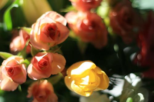 send flowers in winter, please