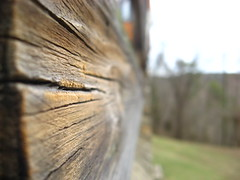 Focus Point on Wood (ginfox) Tags: wood old brown blur green outside gold focus depthoffield cracked