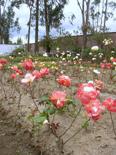 Cotacachi design home flower beds
