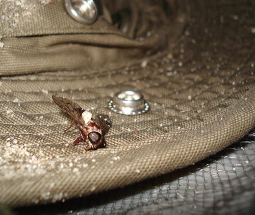 horsefly.jpg