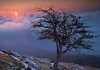 Aralar (Clear Of Conflict) Tags: aralar sierra arbol amanecer sunrise nubes clouds tree nature naturaleza paisaje navarra specland