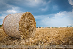 GRIGIO ESTATE - LECCE, SALENTO,PUGLIA, ITALIA AL (Antoniologic  http://www.antonioleo.it/) Tags: light italy sun color nature beauty landscape photo nikon flickr italia foto photographer natural ant natura cielo fav fotografia antonio pioggia salento puglia luce lecce paglia fotografo fotografi vedute sunligth fotographers explor estremo esplora justnature lucesolare antonioleo 1685nikkor freedancephotographers antoniologic photographicworks antonioleoit httpwwwantonioleoit