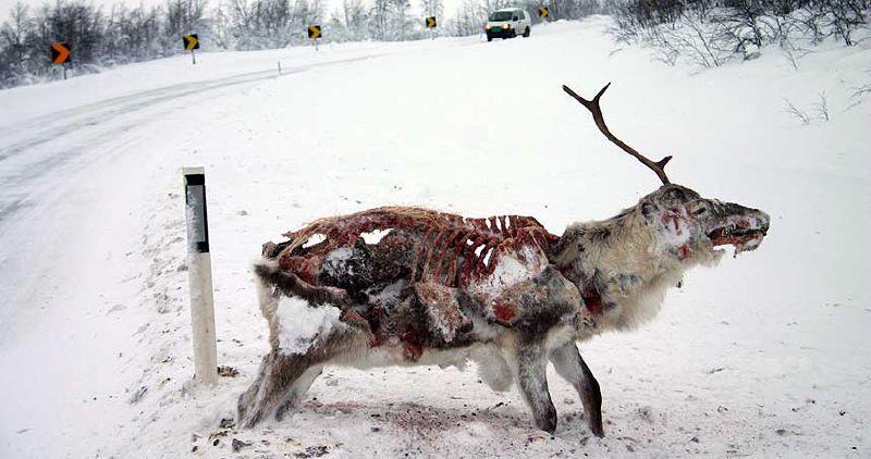frozen_deer