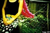 (Twiggy Tu) Tags: portrait green film yellow lomo lca hands punk wind body fiona rocknroll photographyexhibition flappergirl shesmybestmodel p1f1taipei ilovepeachcolor