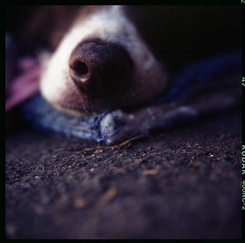 Dogs Life II