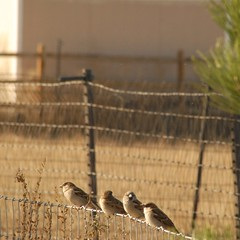 DSC_0006.JPG (webber0075) Tags: autumn usa fall birds animals fence colorado brighton denver d200 adamscounty commercecity unincorporated thewest nearbarrlake avianexcellence unincorporatedarea